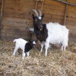 Desiree & Kid at Odds Farm