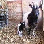 Matilda & Kid at Odds Farm