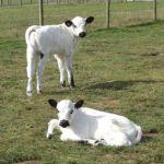 William & Wilma at Odds Farm