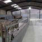 Animal Barns at Odds Farm