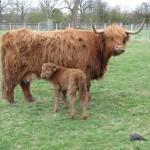 Amber & Kinkerbell at Odds Farm Park