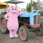 Tractor Weekend at Odds Farm Park (1-3 May)