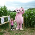 Odds Farm Park Mascot, Rodney Pig, Explores The Maize Maze!