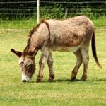 Meet The Animals At Odds Farm Park