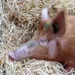 Wibbly Arrives At Odds Farm Park