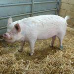 Igglepiggle Arrives At Odds Farm Park