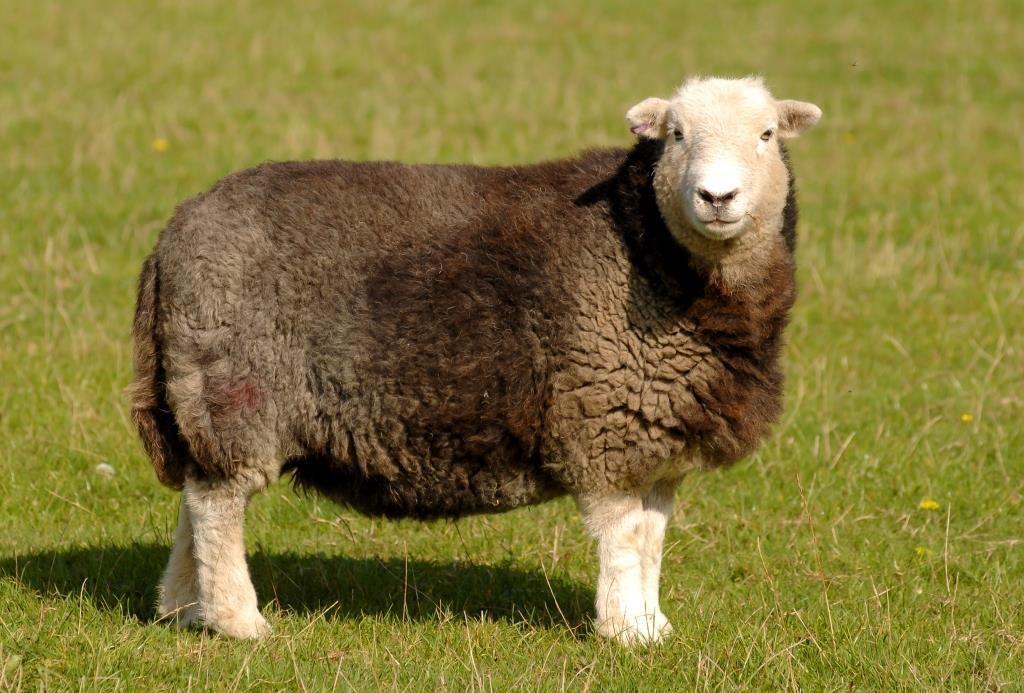 sheep odds farm park