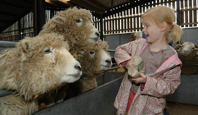 Feeding Sheep at Odds Farm Park