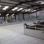 animal-barn-2-150x150