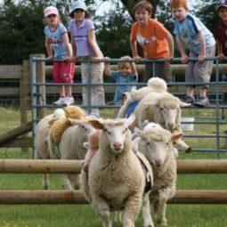 SHEEP-RACING-SLIDER