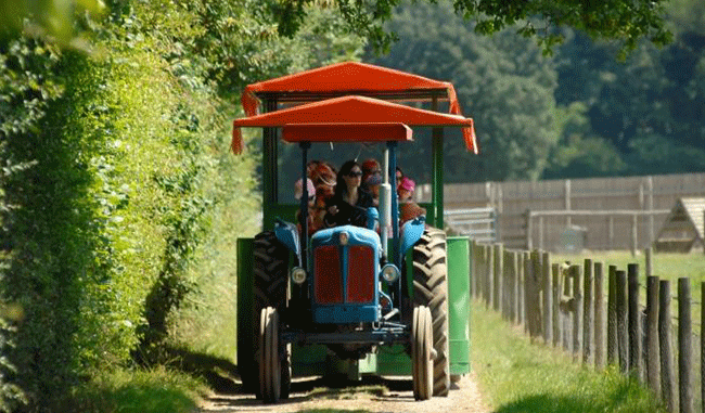 Tractor and Trailer Rides at Odds Farm