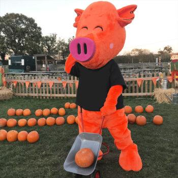 halloween pumpkin patch at odds farm