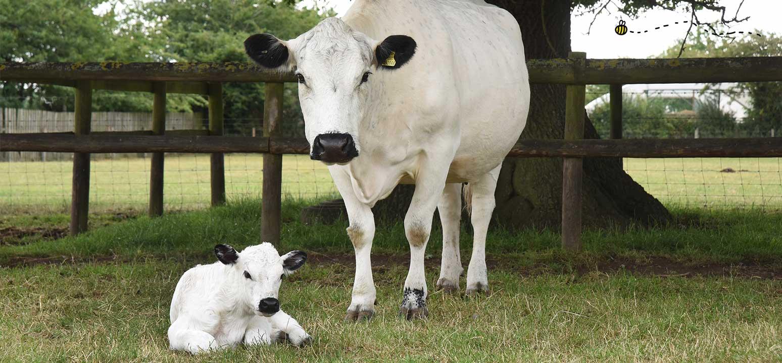 rare breeds month at odds farm park